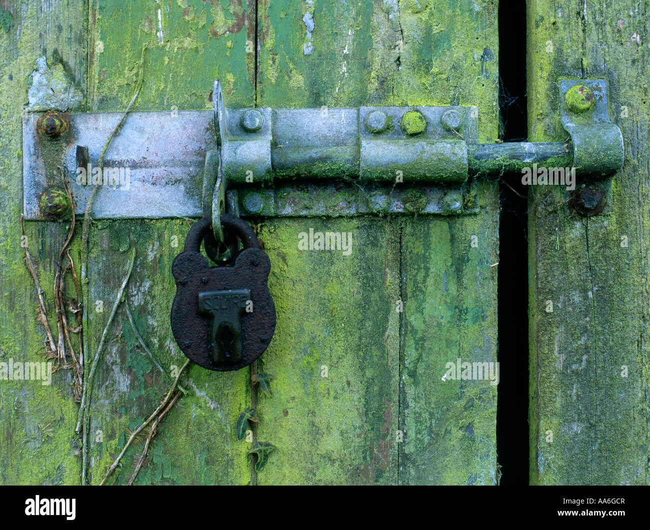 Rusty padlock on an old shed door in the corner of a feld in Somerset - Stock Image