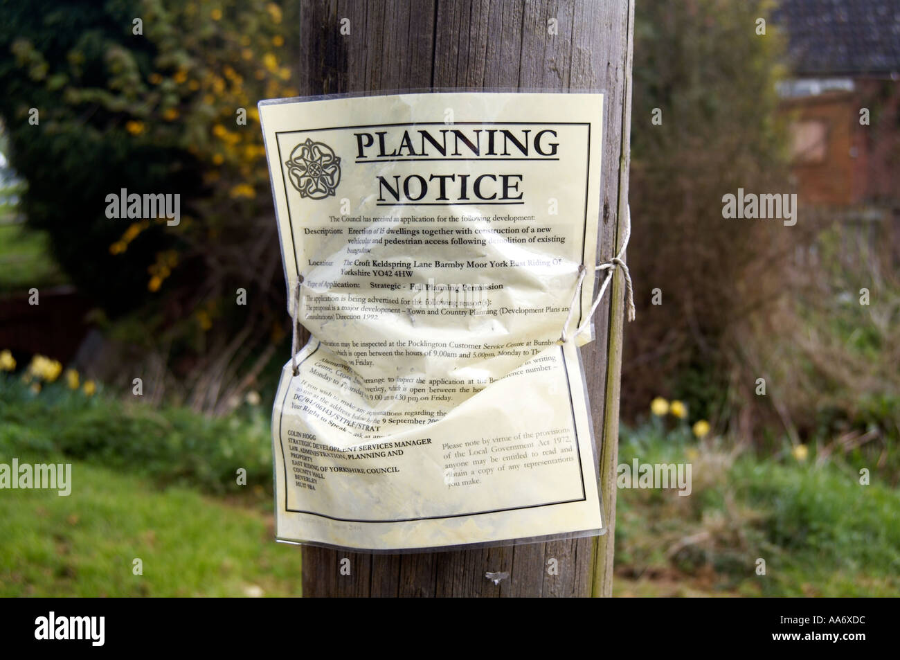 Planning Application notice issued by local authority fix to a telegraph pole - Stock Image