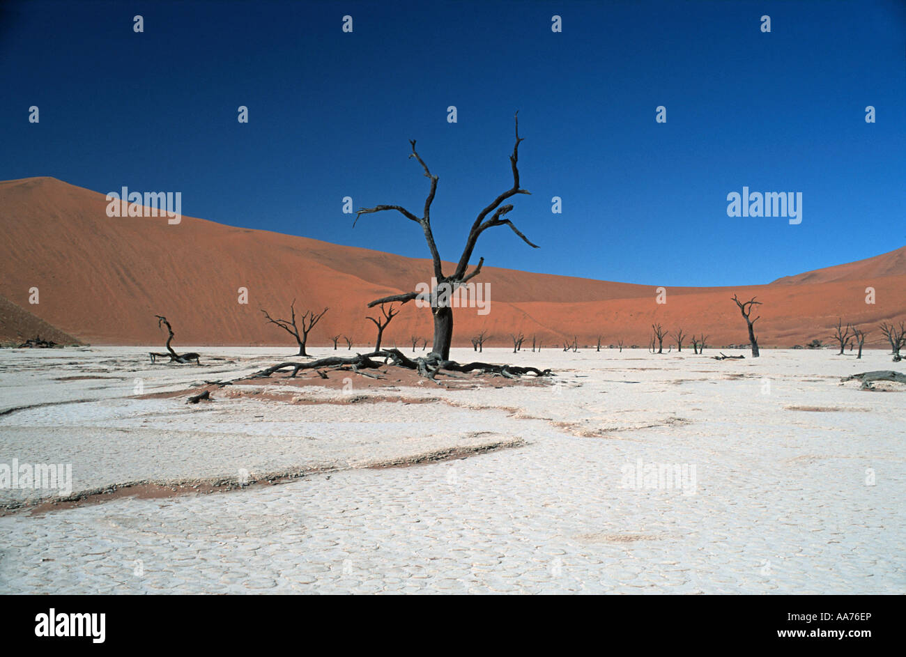 Sand dunes and dessicated trees on a salt pan Dead Vlei Namib Naukluft National Park Namibia - Stock Image