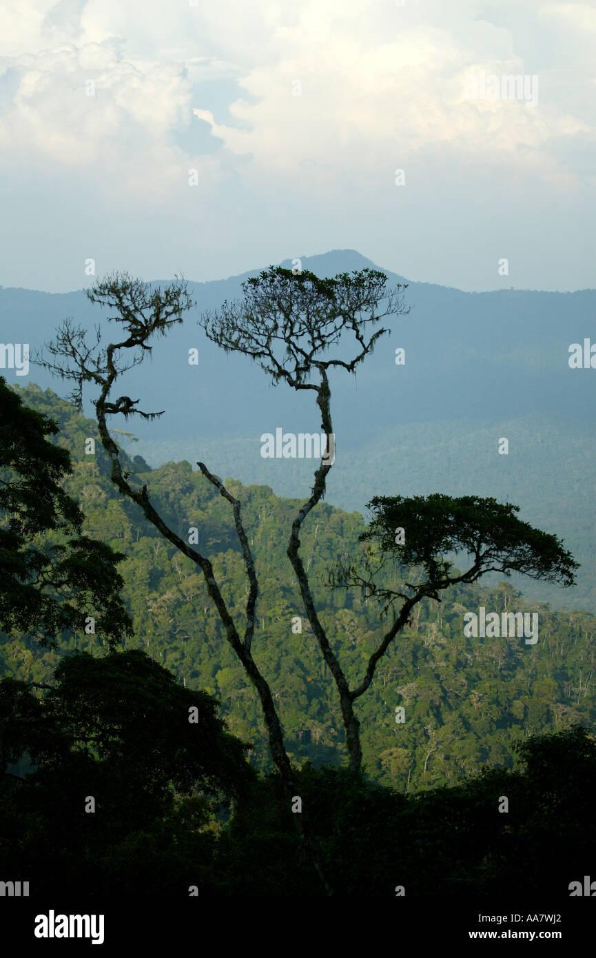 Darien national park seen from Cerro Pirre,  Darien province, Republic of Panama. Stock Photo