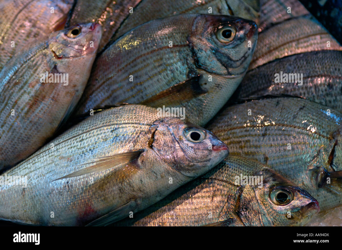 Rows of sea bream on a fishmonger's stall. Stock Photo