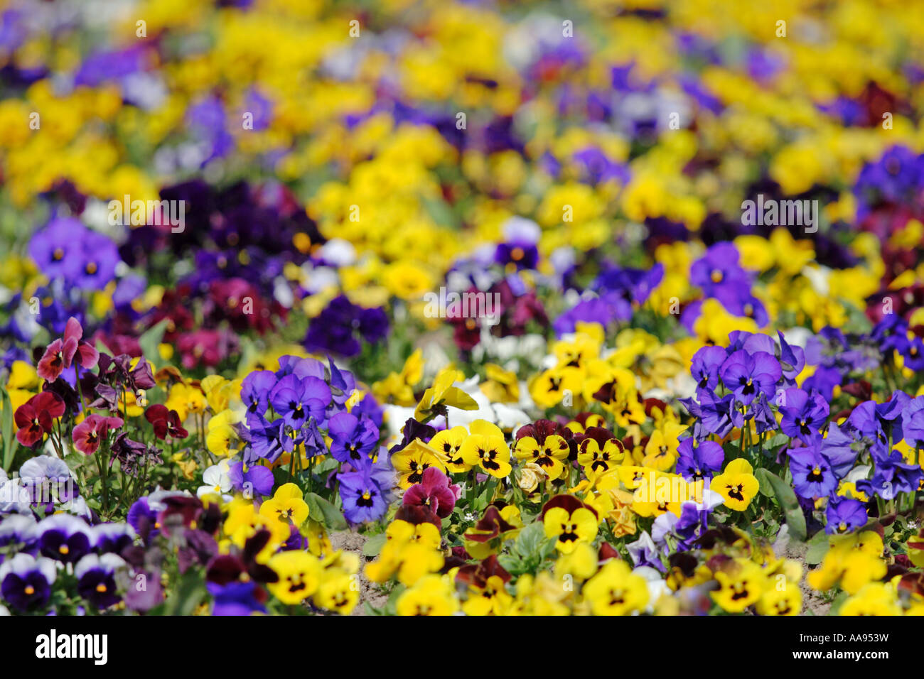 Garden of flowers - Stock Image