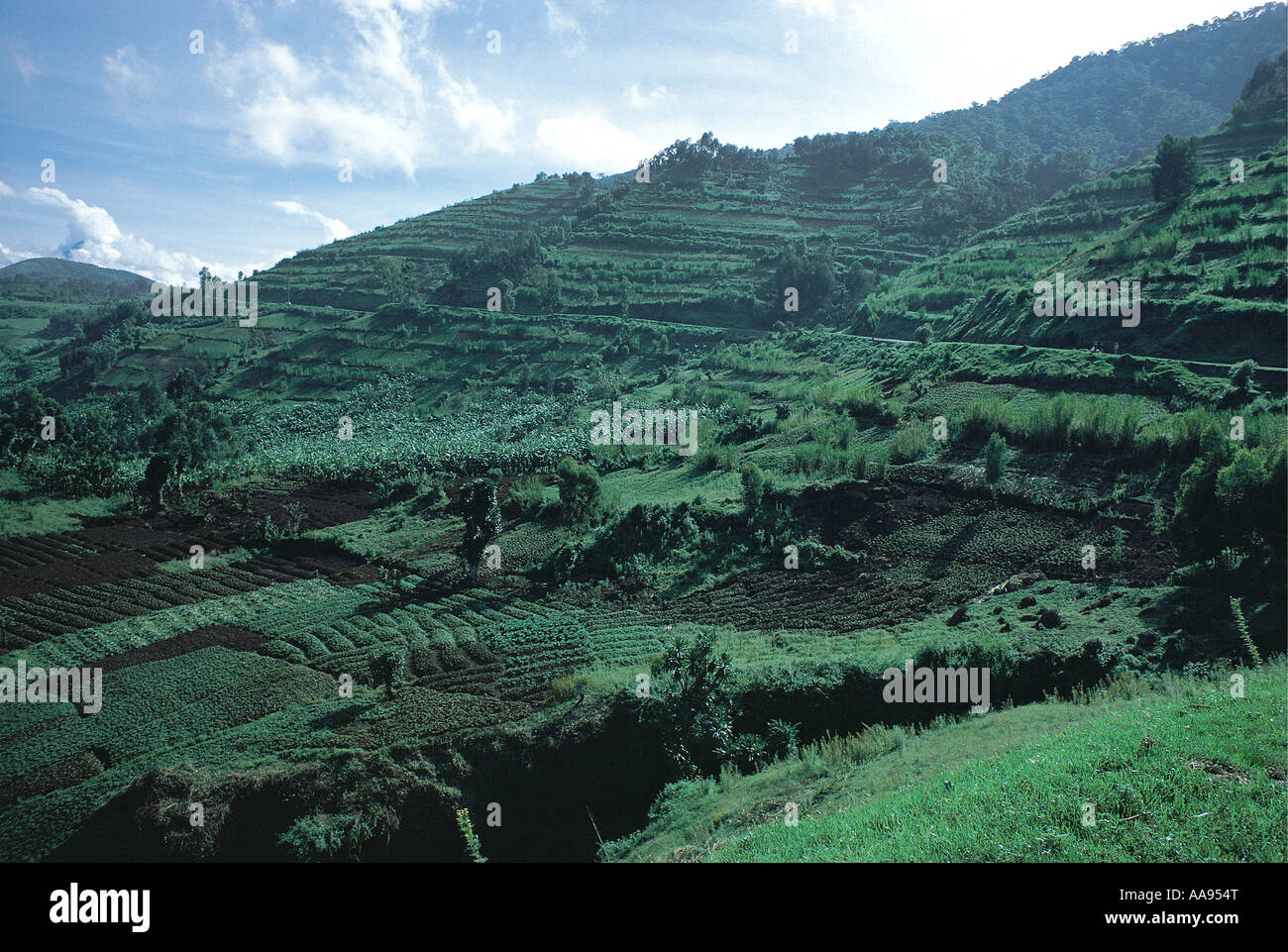 Intensive cultivation on small farms with terraces north of Kigali Rwanda A road is crossing the tarraced hillside - Stock Image