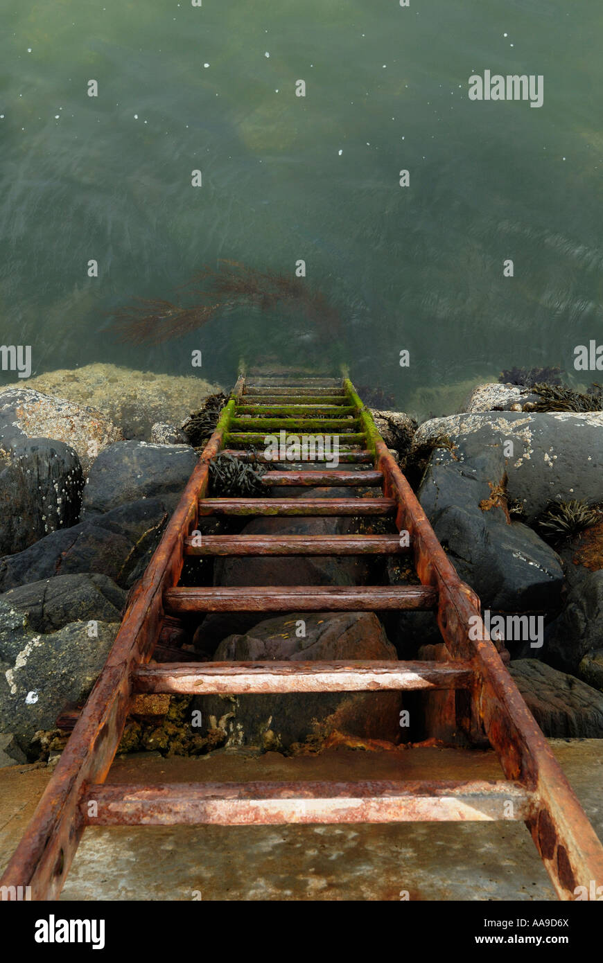 Ladder going into the sea - Stock Image