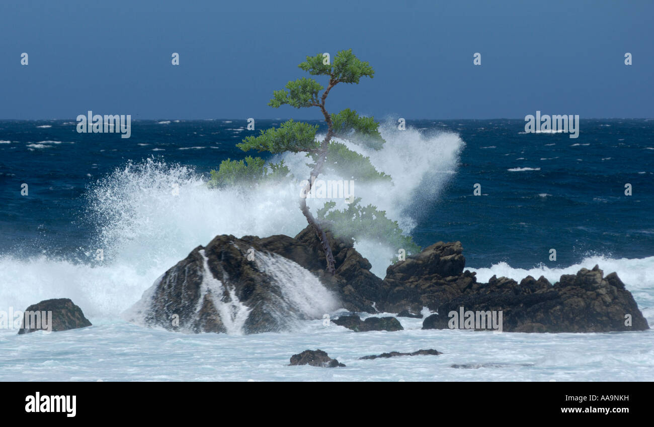 Isolated tree in the spray - Stock Image