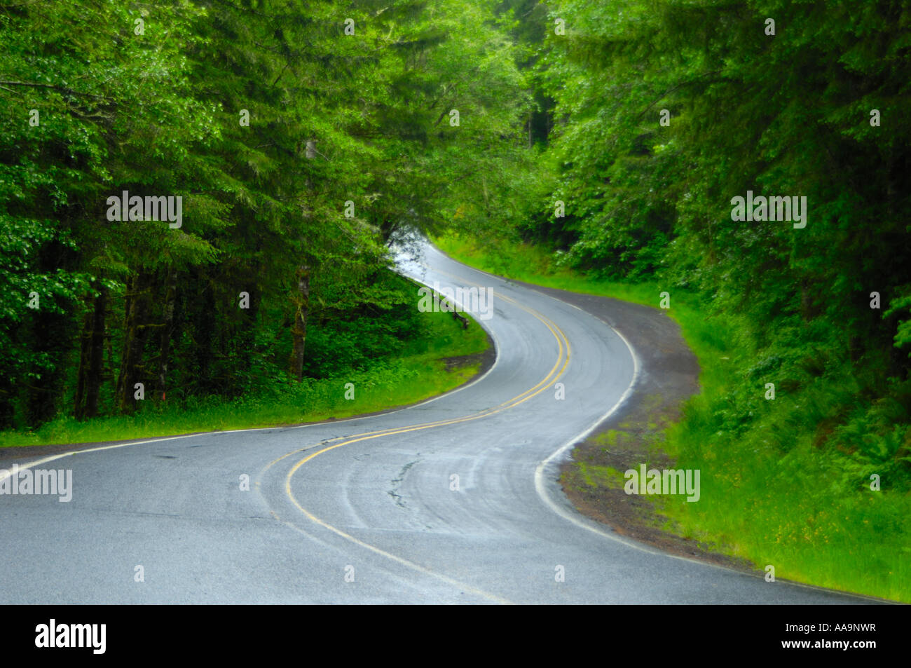 Road into the forest - Stock Image
