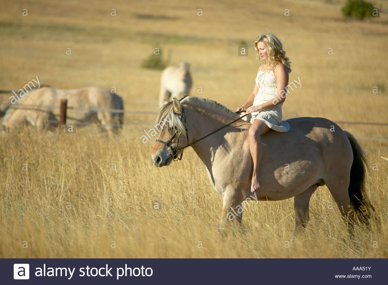Woman riding a horse bareback Stock Photo: 12564518 - Alamy
