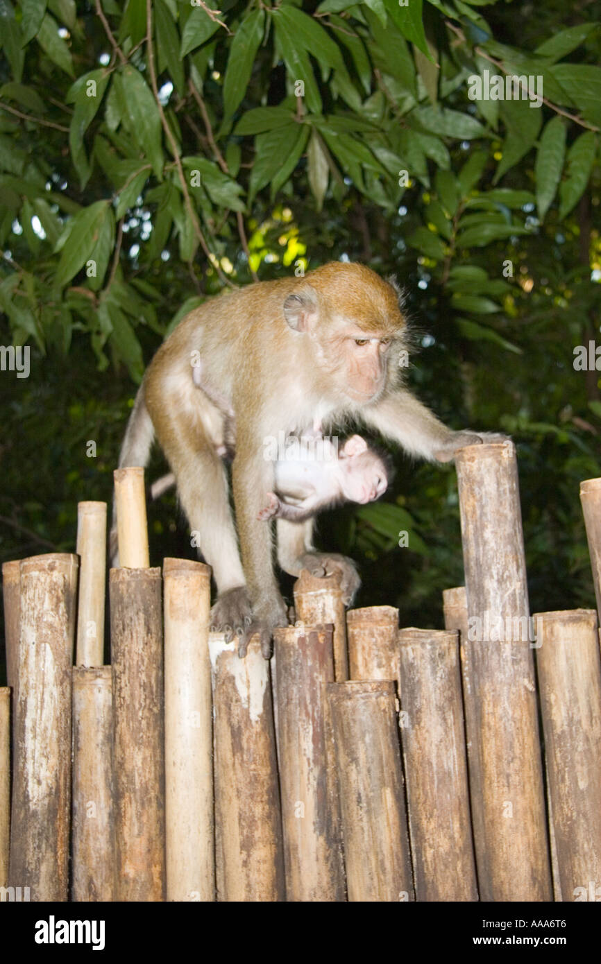 Monkey With Baby Railay Krabi Thailand Stock Photo 7180037