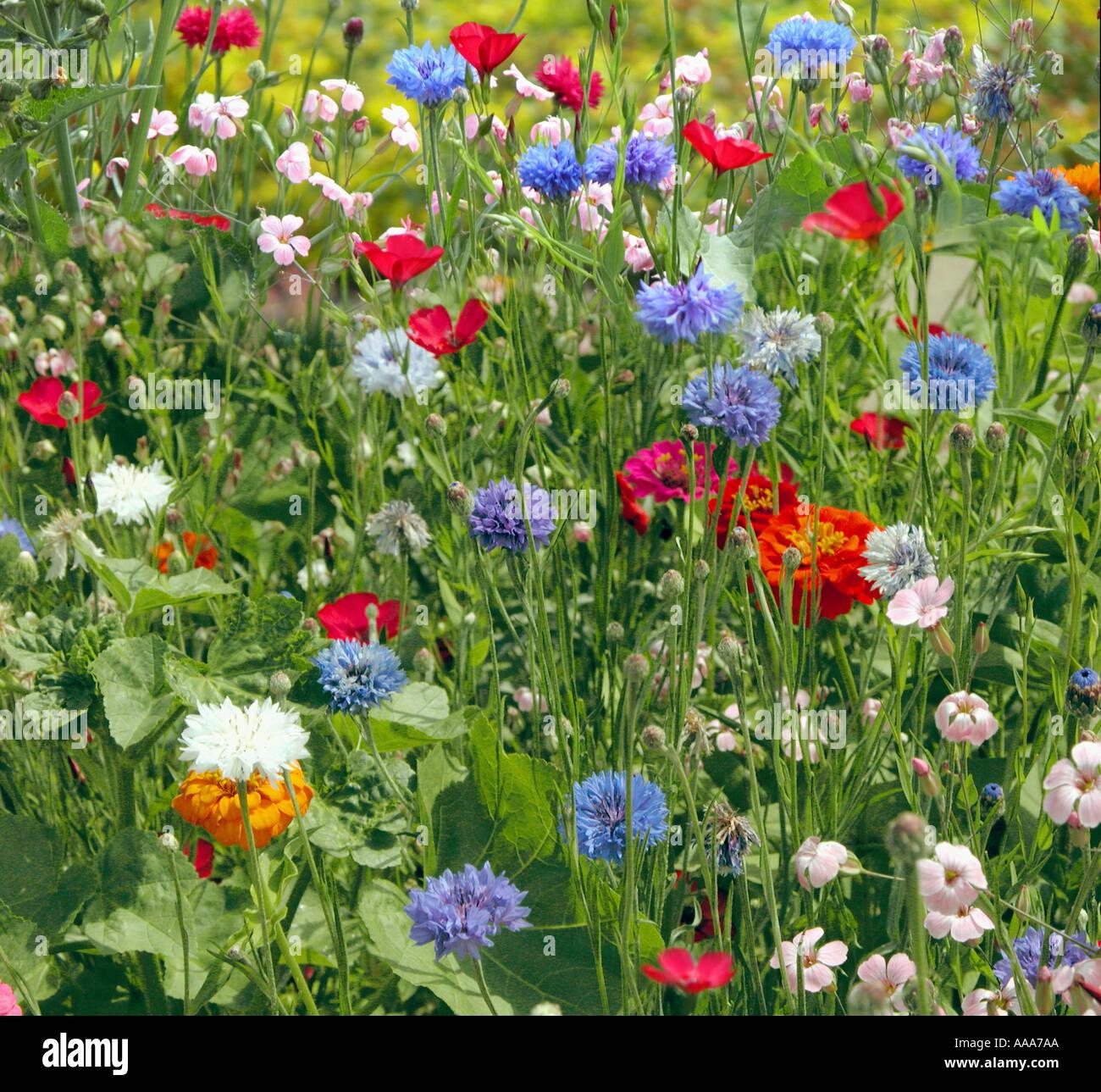 8ba549c3 rich summer meadow garden plants flowers blossom blooming bloom happy rich  nice beautiful