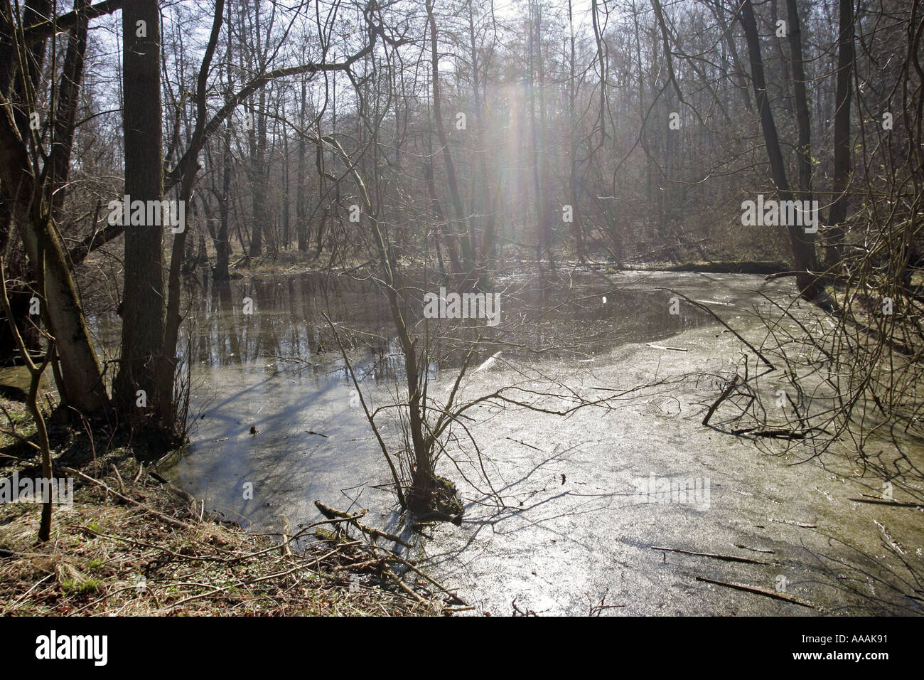 Waldteich pond in a wood  Stock Photo