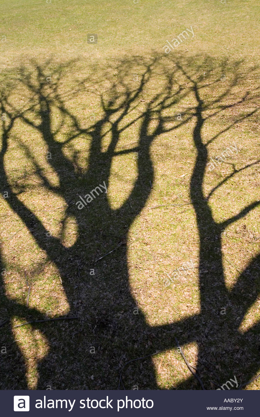 Shadows of trees in the spring in Ontario Canada - Stock Image