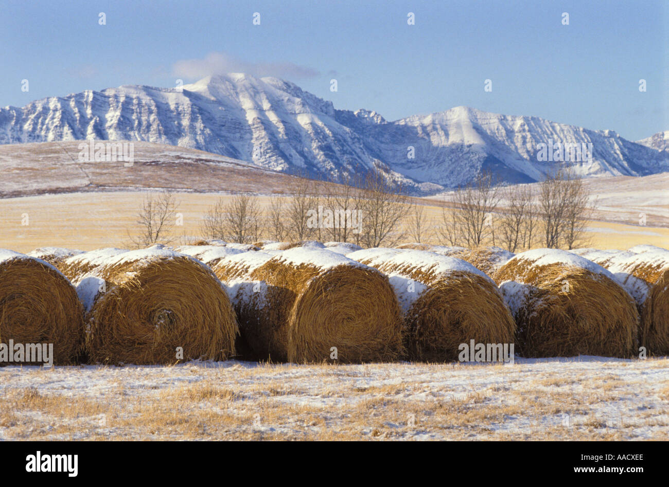 Straw bales in foothills of Rocky Mountains Alberta Canada - Stock Image
