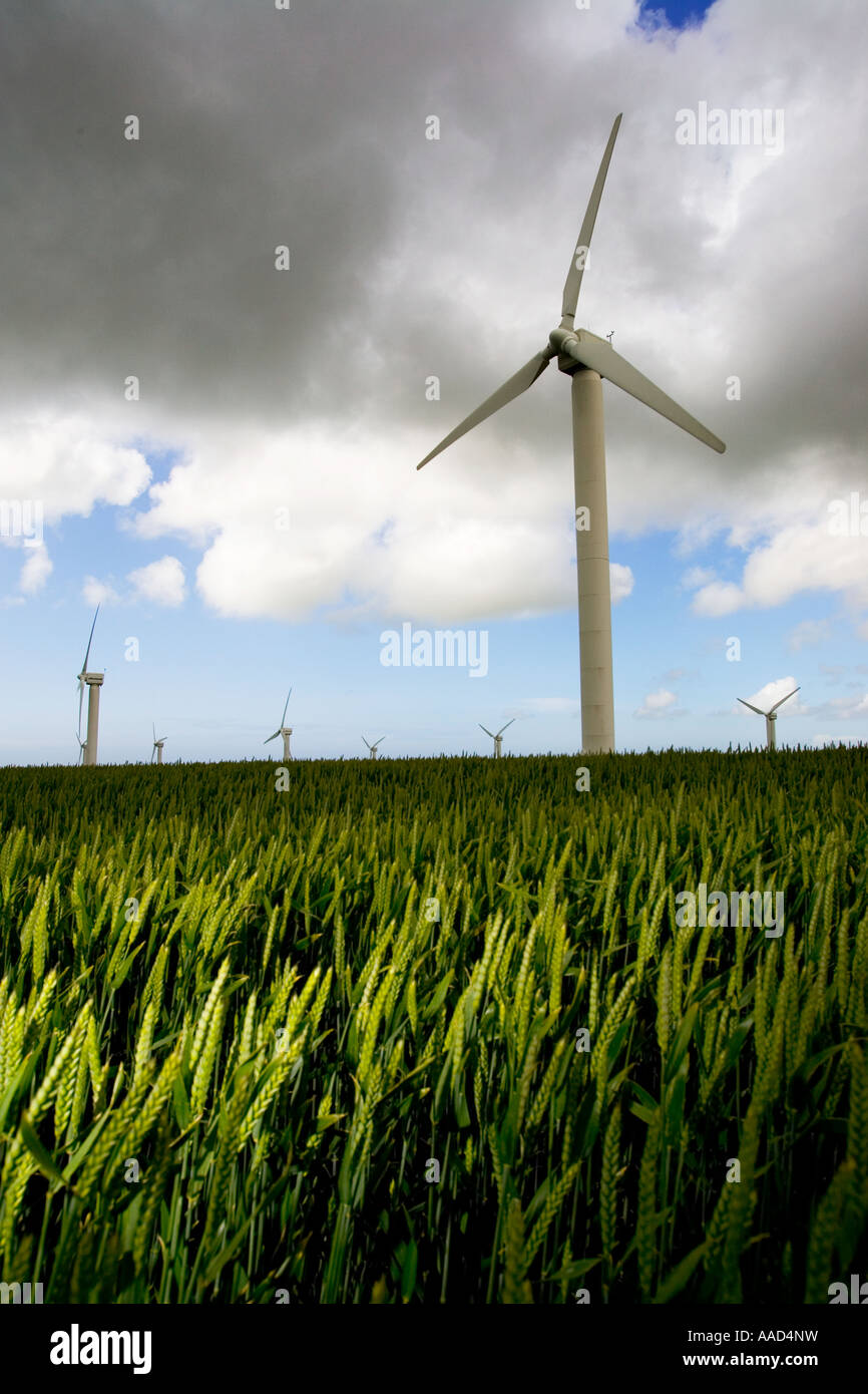 Four Burrows Wind Farm Truro in a corn field farm land during Gale force winds and rain Cornwall England UK Great - Stock Image