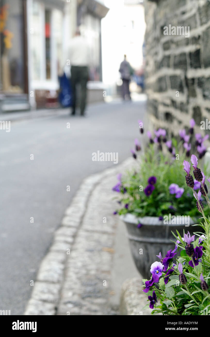 Potted plants on a doorstep, UK. - Stock Image