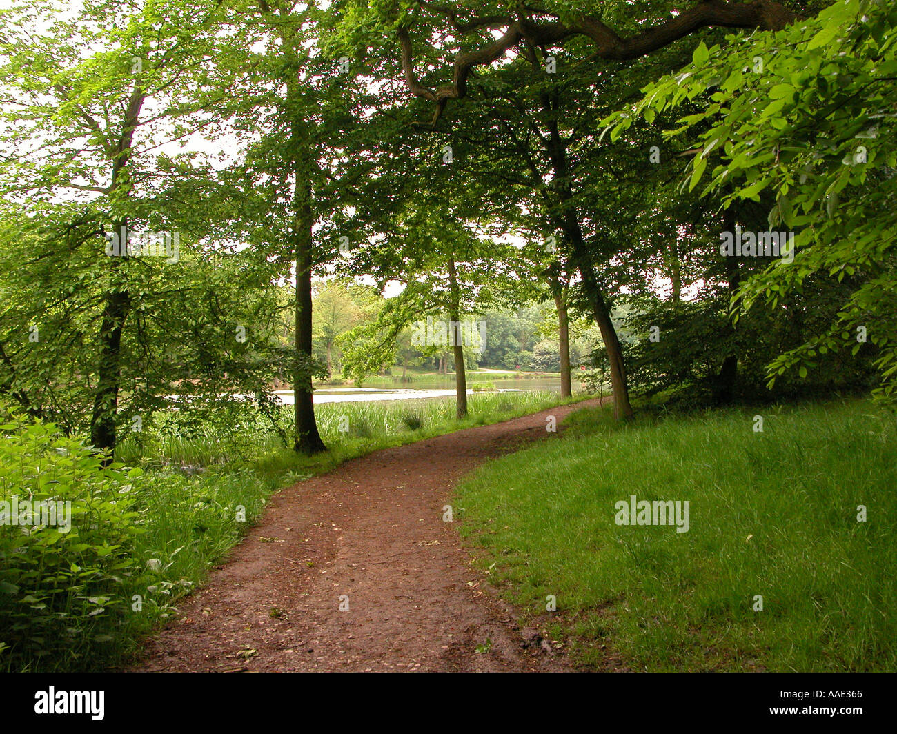 forrest path lake - Stock Image