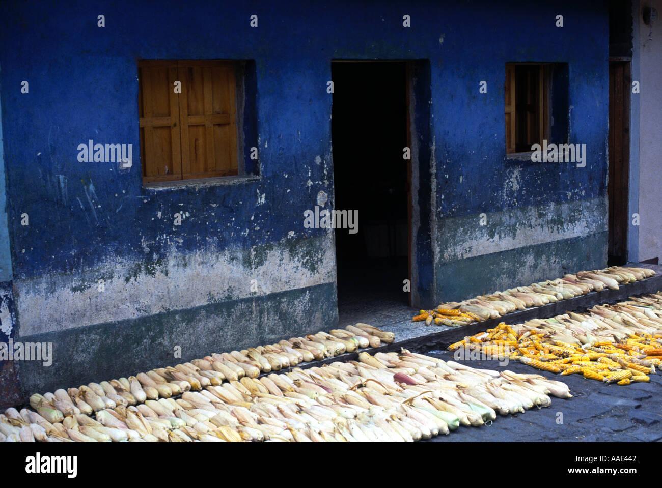 Sweet corn drying at a village Santiago Atitlan on Lake Atitlan Guatemala - Stock Image