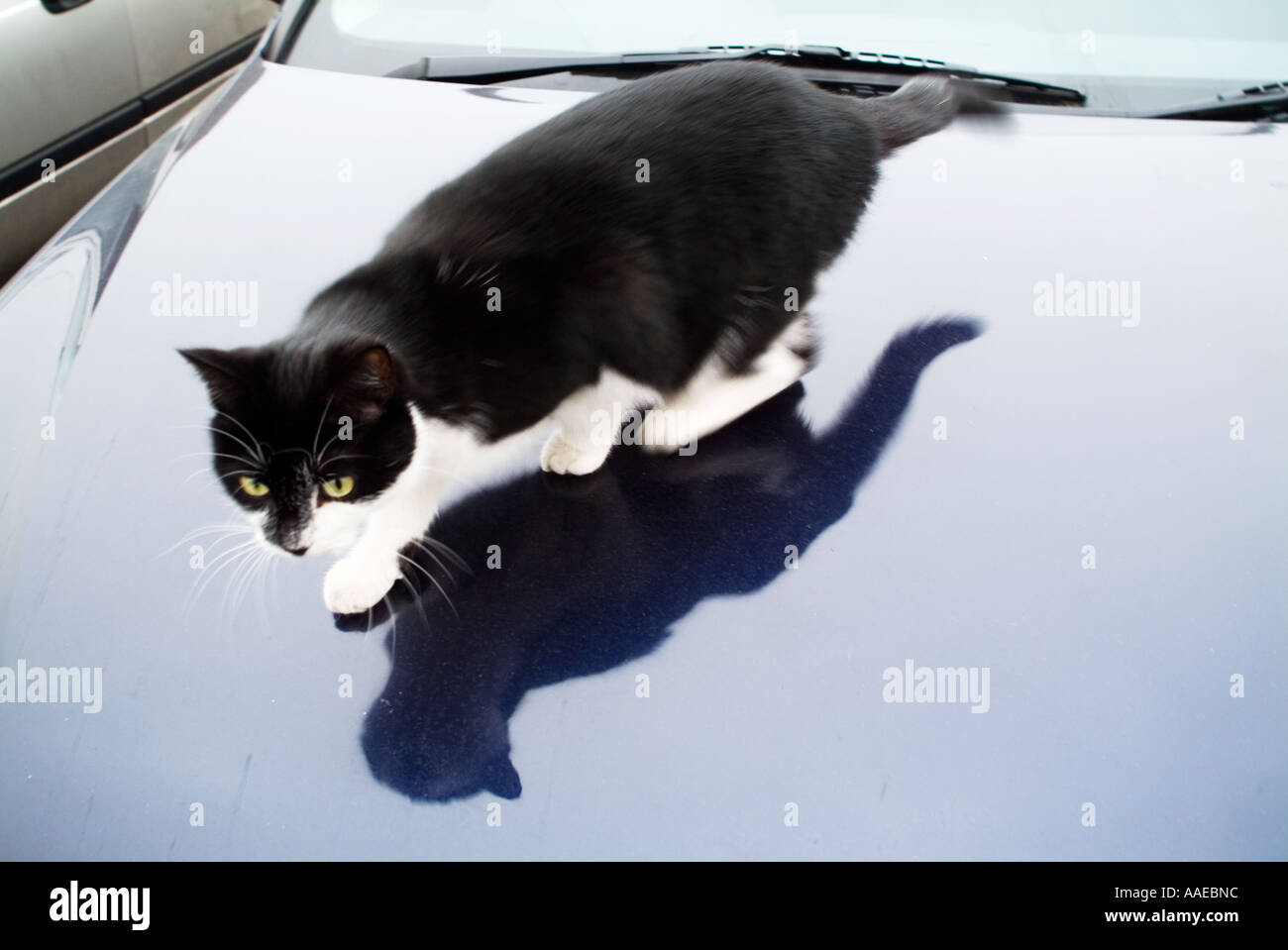 Cat sitting alone on a car roof - Stock Image