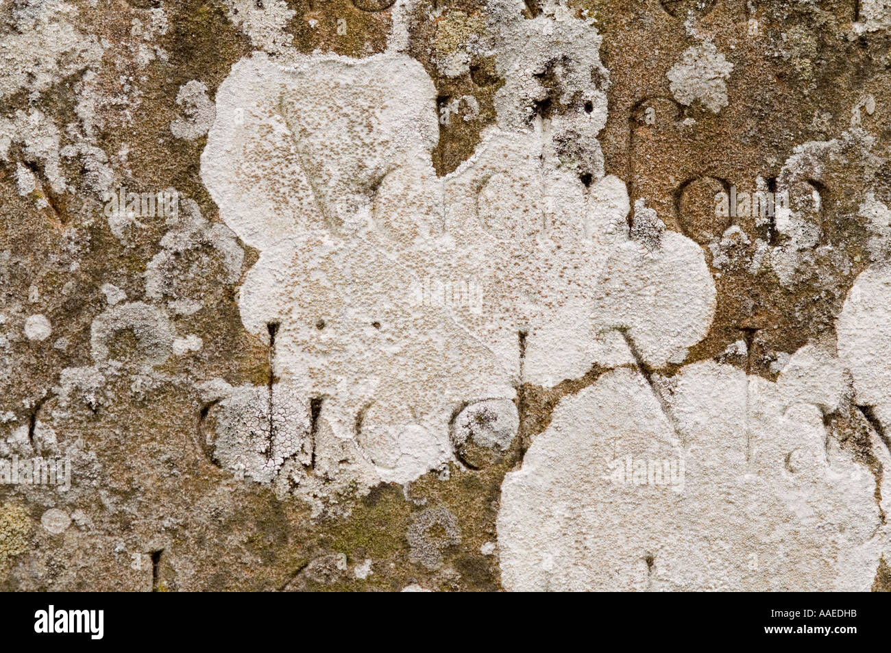 Lichen on gravestone Mucher village graveyard, Upper Swaledale, North Yorkshire, England, UK - Stock Image