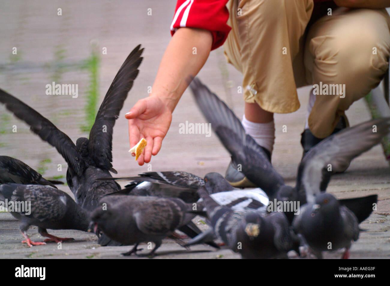 Hand Nourishing a Pigeon at street of Banska Bystrica, Slovakia Stock Photo