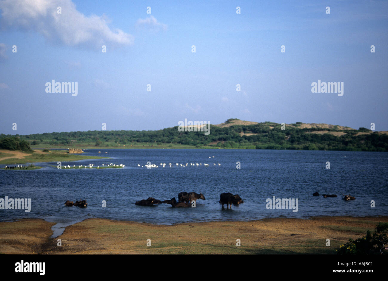 Yala National Park Sri Lanka - Stock Image