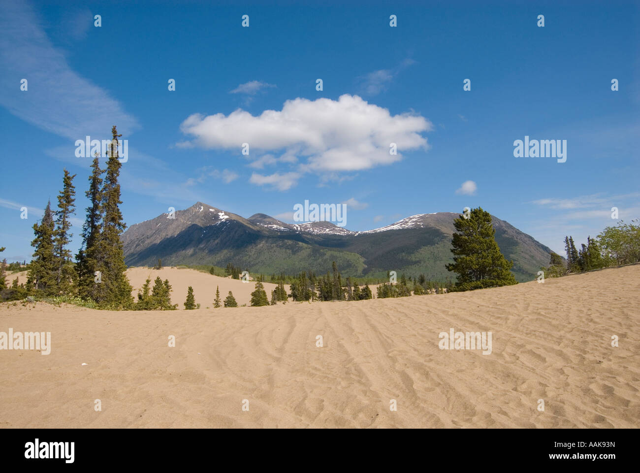 The smallest desert in the world the Carcross Desert in the southern Yukon - Stock Image