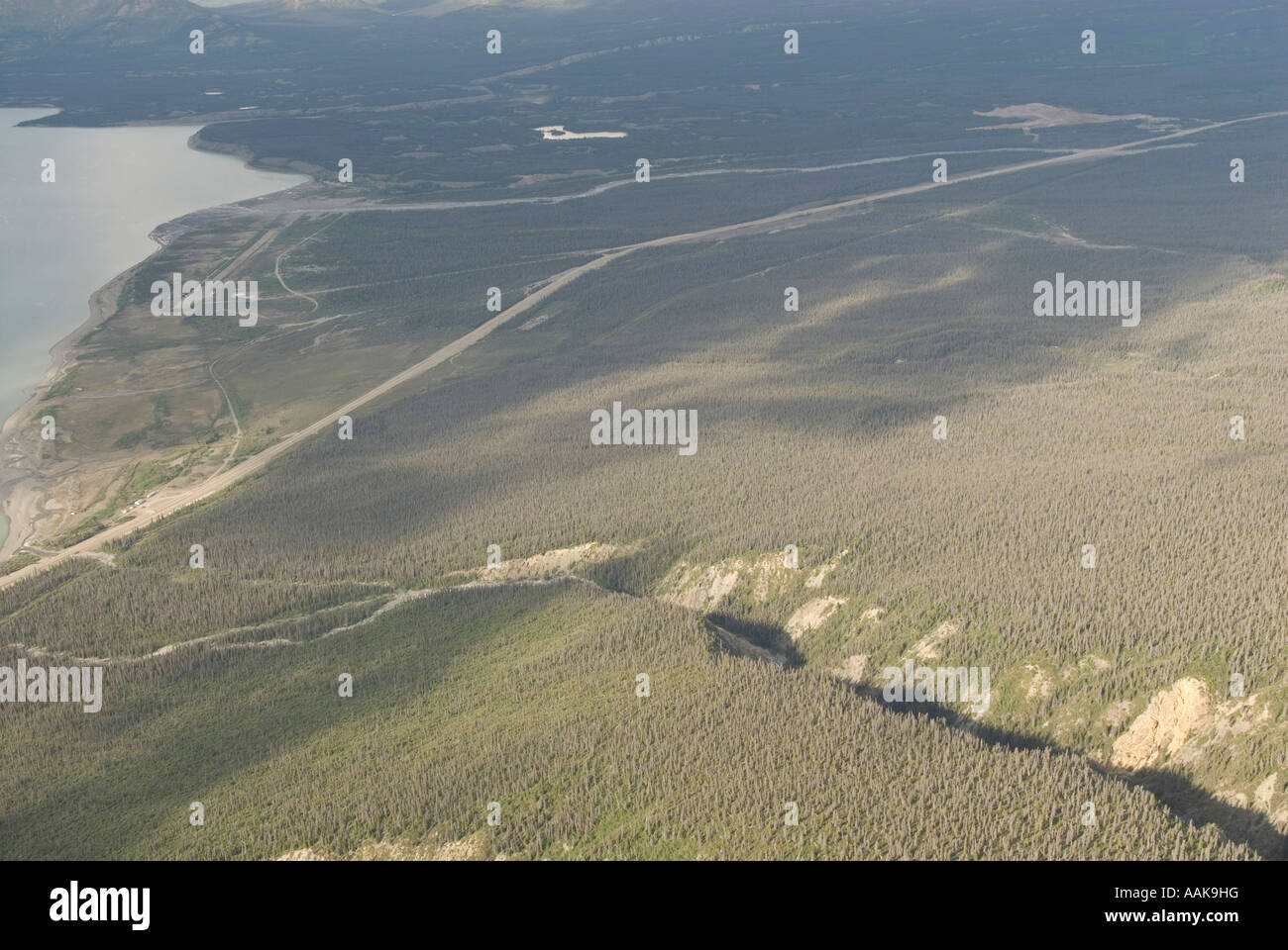 Dead forest killed by mountain pine beetle near Klaune National Park in the Yukon Canada - Stock Image
