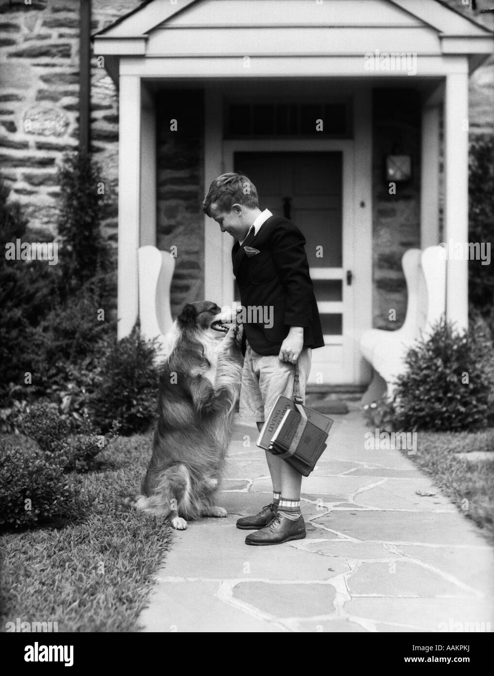 1930s BOY ON SIDEWALK LEAVING FOR SCHOOL SHAKING HANDS WITH COLLIE DOG - Stock Image