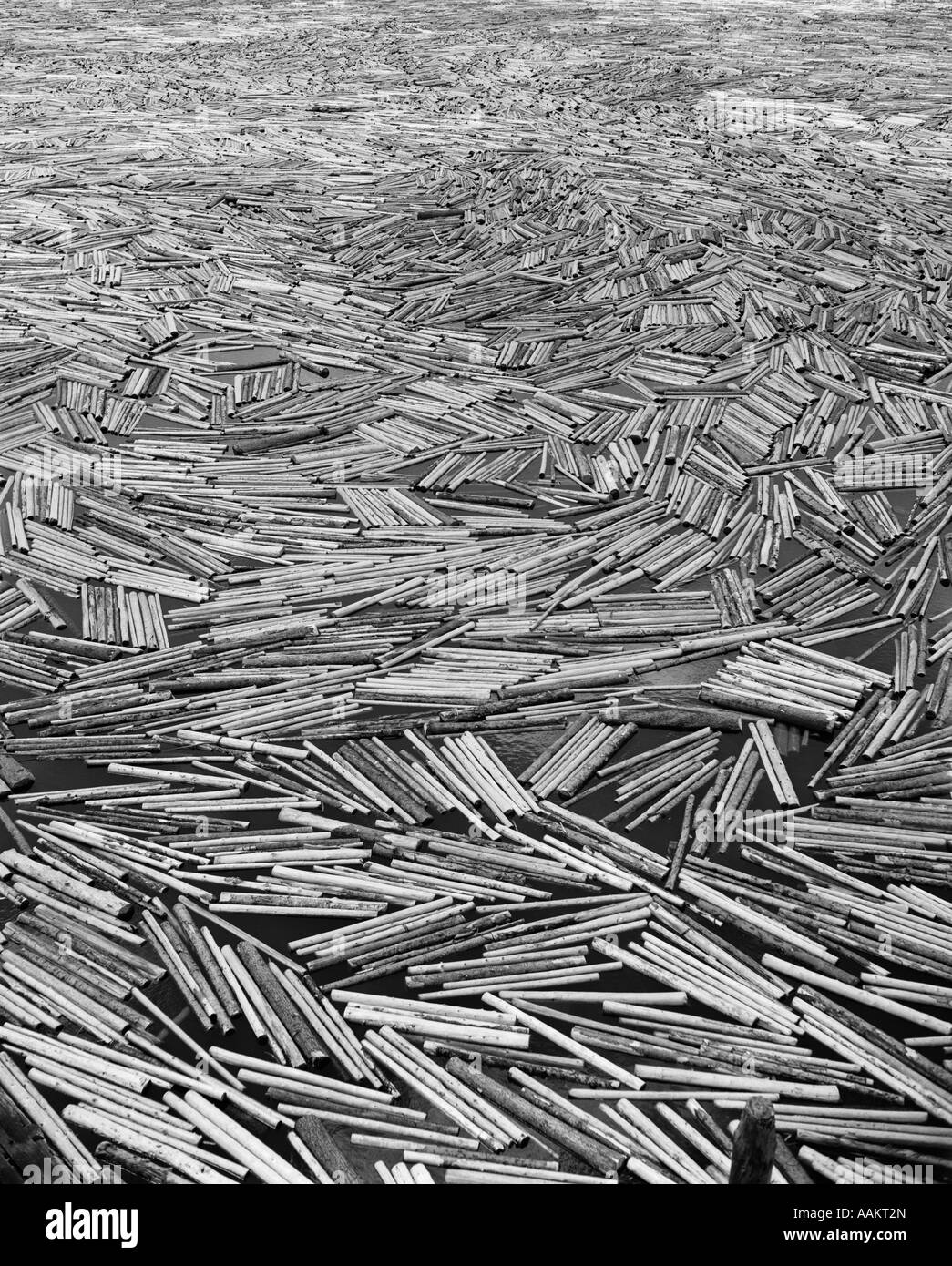 1960s SCENE OF PULP WOOD FLOATING IN LAKE PORT - Stock Image