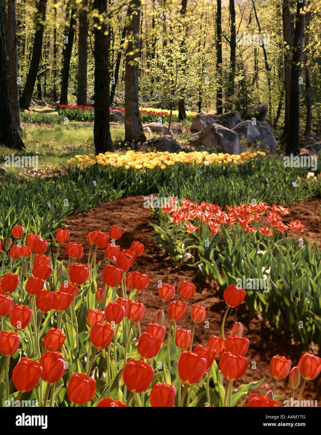 TREES TULIPS IN BLOOM SPRINGTIME STERLING FOREST GARDENS NY Stock ...