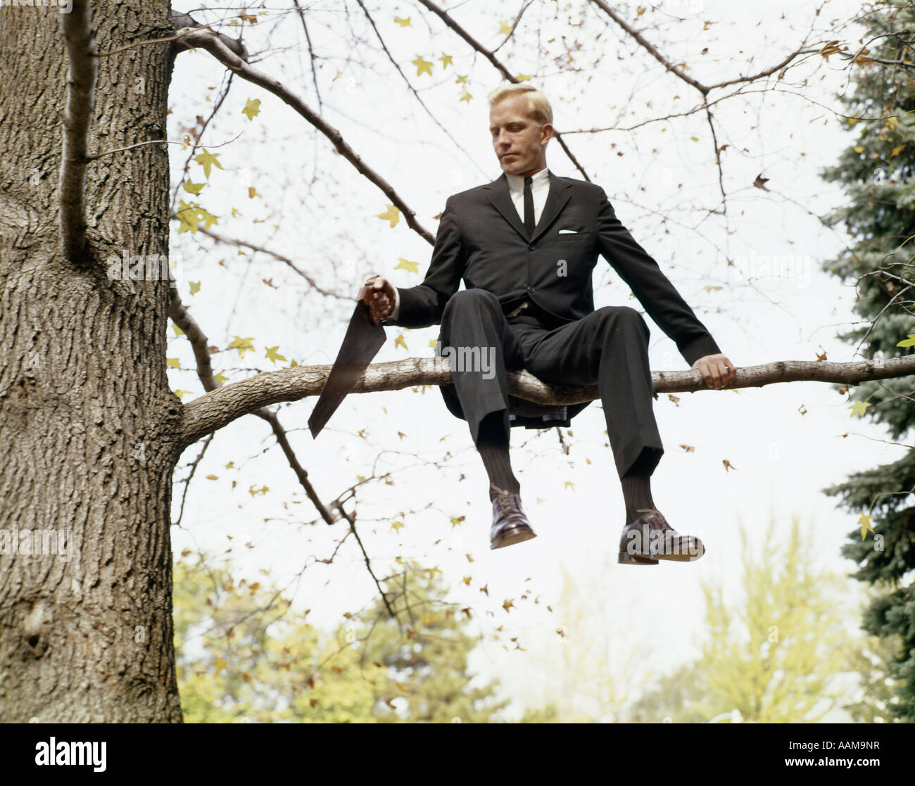 1960s-man-in-tree-sawing-off-branch-he-i