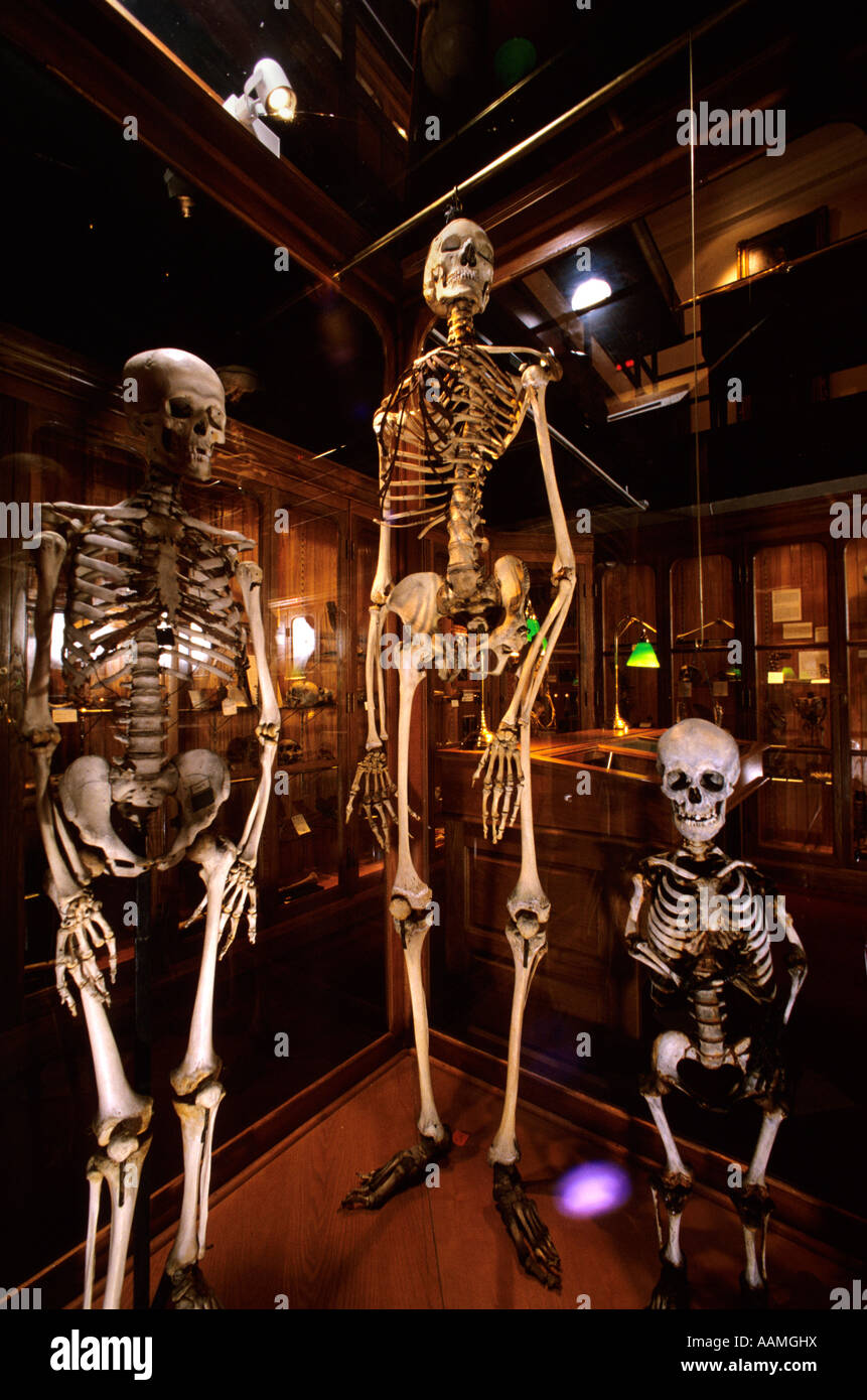 MUTTER MUSEUM COLLEGE OF PHYSICIANS PHILADELPHIA PA Stock Photo ...