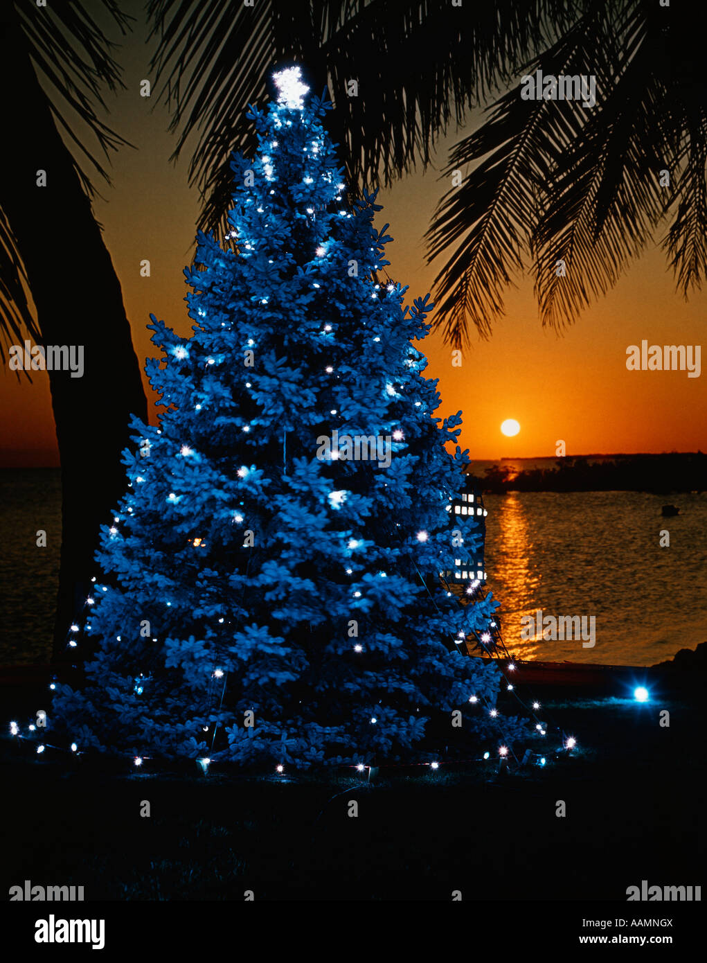 1970s blue christmas tree with lights on tropical beach at sunset tacky retro vintage stock