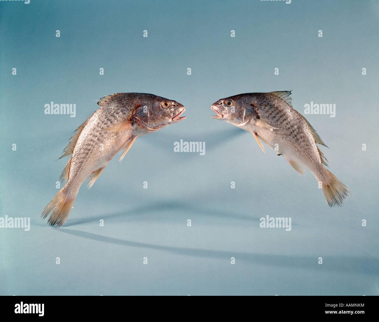Pisces Symbol Stock Photos Pisces Symbol Stock Images Alamy