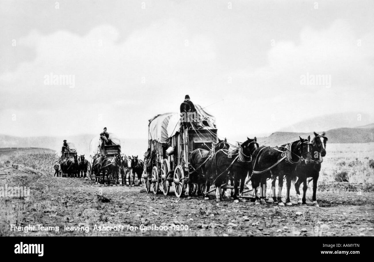 1900s OLD POST CARD OF COVERED WAGON FREIGHT TEAMS LEAVING ASHCROFT FOR CARIBOO CANADA - Stock Image