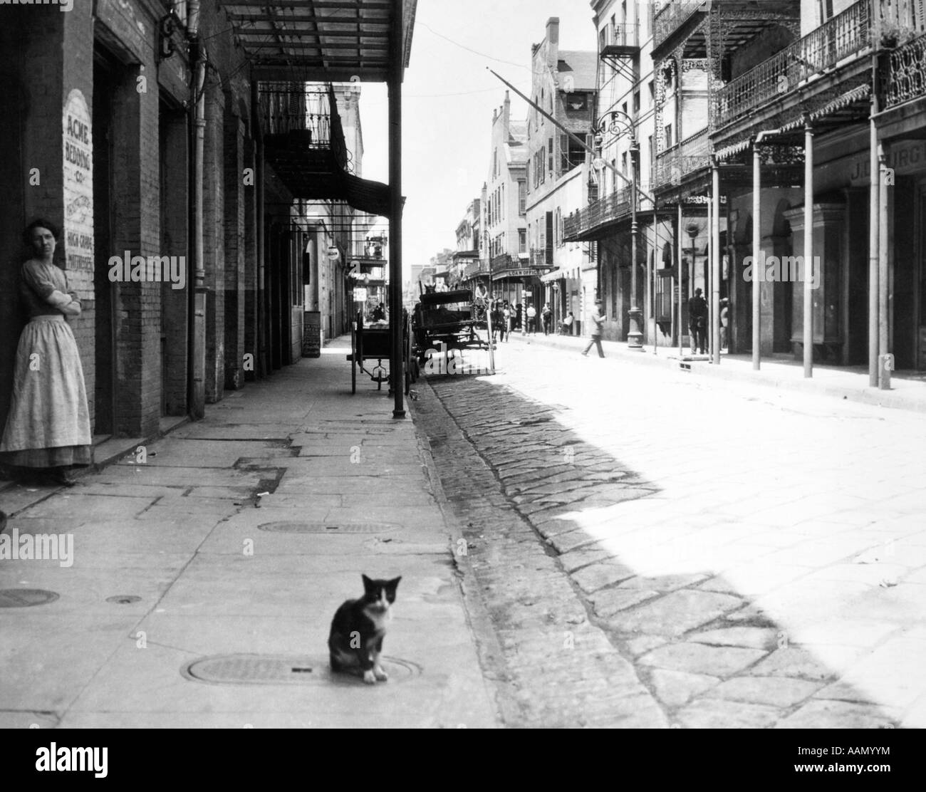 EARLY 1900s CAT SITTING STREET OLDER SECTION OF NEW ORLEANS LOUISIANA USA - Stock Image