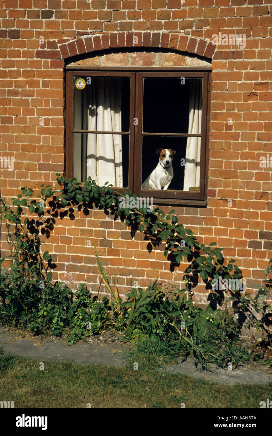 Dog looking out of house window with Neighbourhood Watch sticker Wales UK - Stock Image