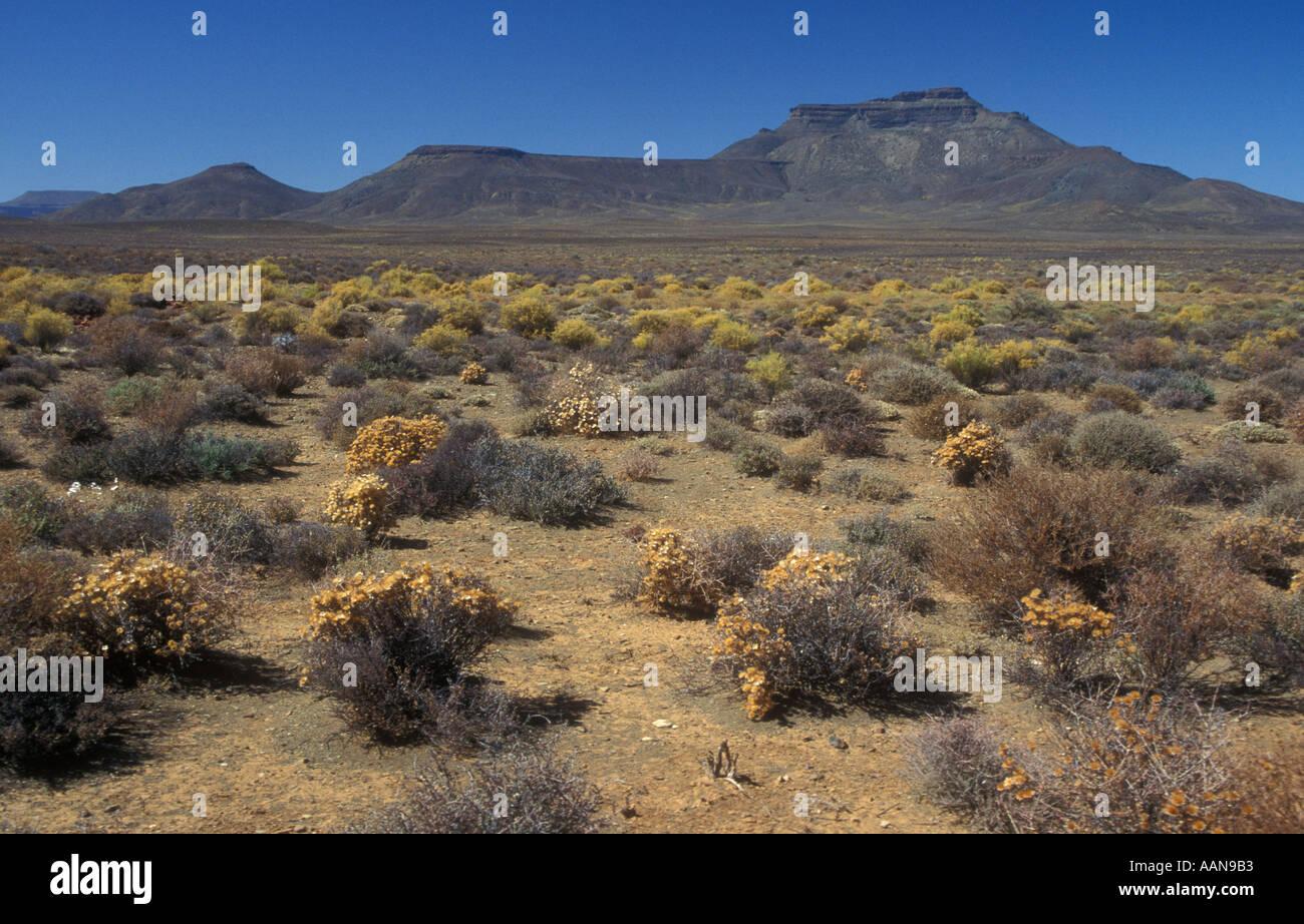 Landscape bushveld RSA South Africa drought - Stock Image