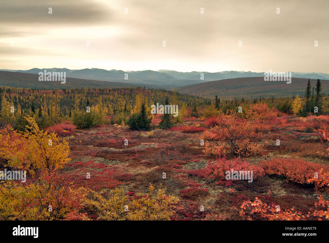 tundra-in-autumn-at-the-arctic-circle-dempster-highway-yukon-canada-AANE79.jpg