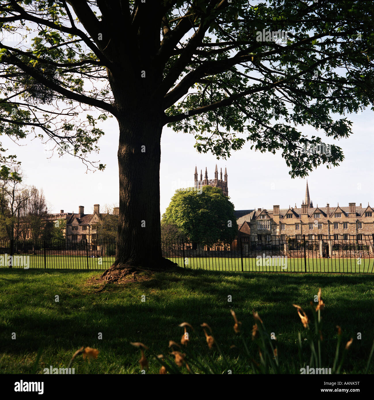 View across Merton Playing Field towards Corpus Christi left and Merton College right Oxford University April 2007 - Stock Image