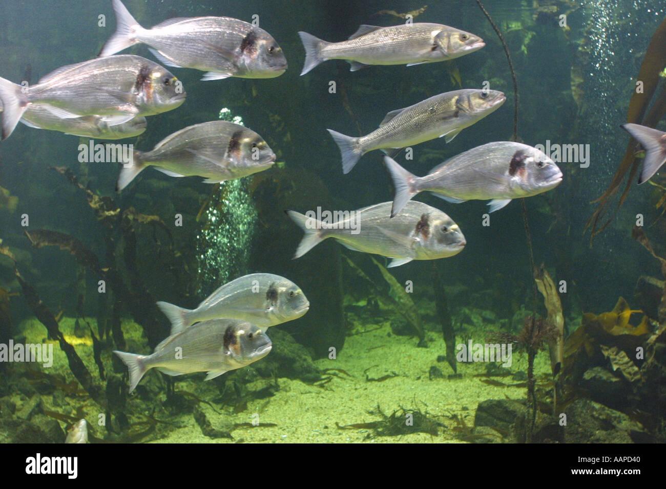 The Aquarium in the old GLC Building London England GB UK - Stock Image