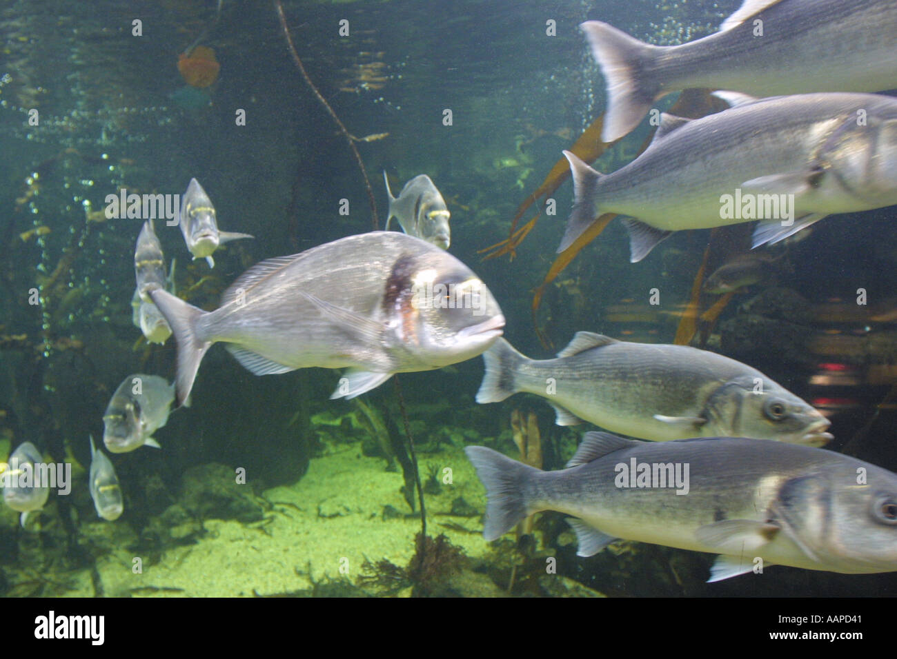 The Aquarium in the old GLC Building London England - Stock Image