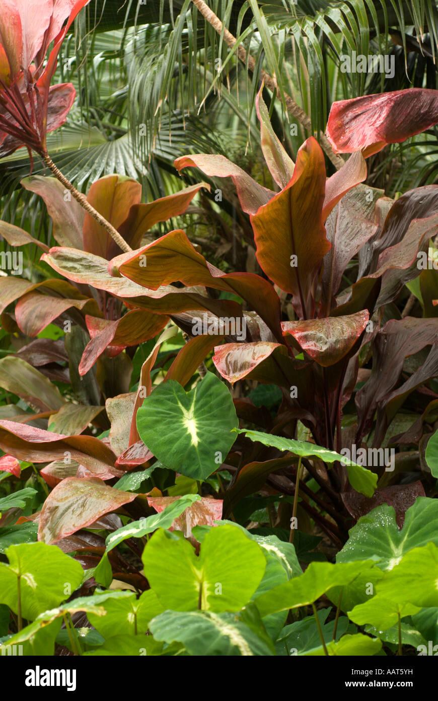 Hoomaluhia Botanical Garden Stock Photos & Hoomaluhia Botanical ...