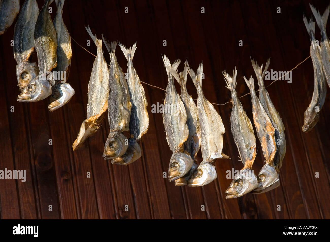 Dry fish, Town museum Nesebar, Black Sea, Bulgaria - Stock Image