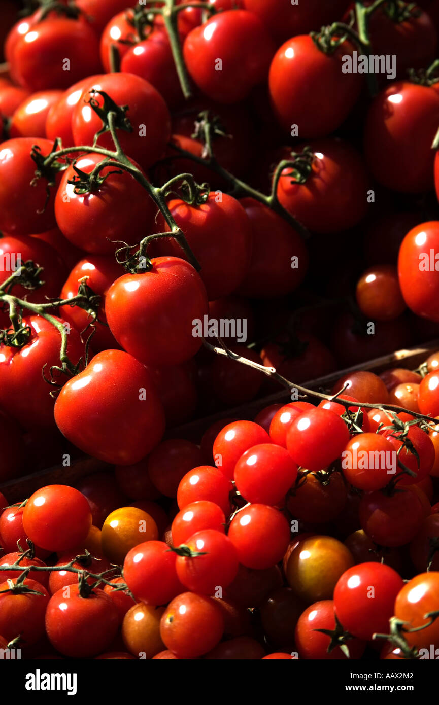 Glorious red tomatoes - Stock Image