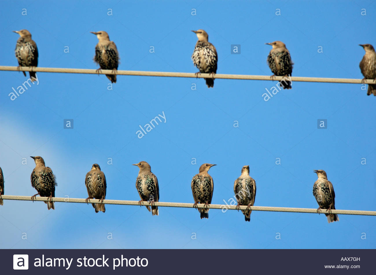L Vulgaris Stock Photos & L Vulgaris Stock Images - Alamy