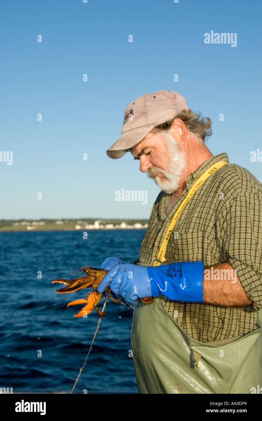 Lobsterman Keith Peters of Prince Edward Island, Canada. - Stock Image
