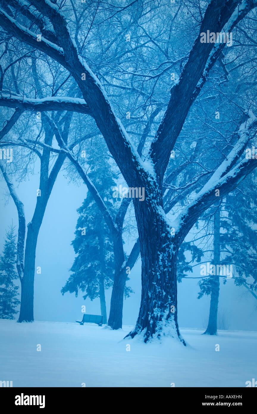 Monotone winter scene - Stock Image