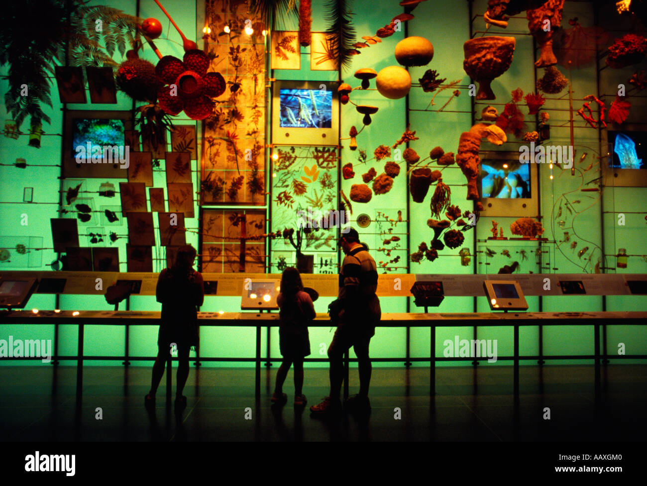 A family standing in the hall of biodiversity at the museum of natural history. - Stock Image