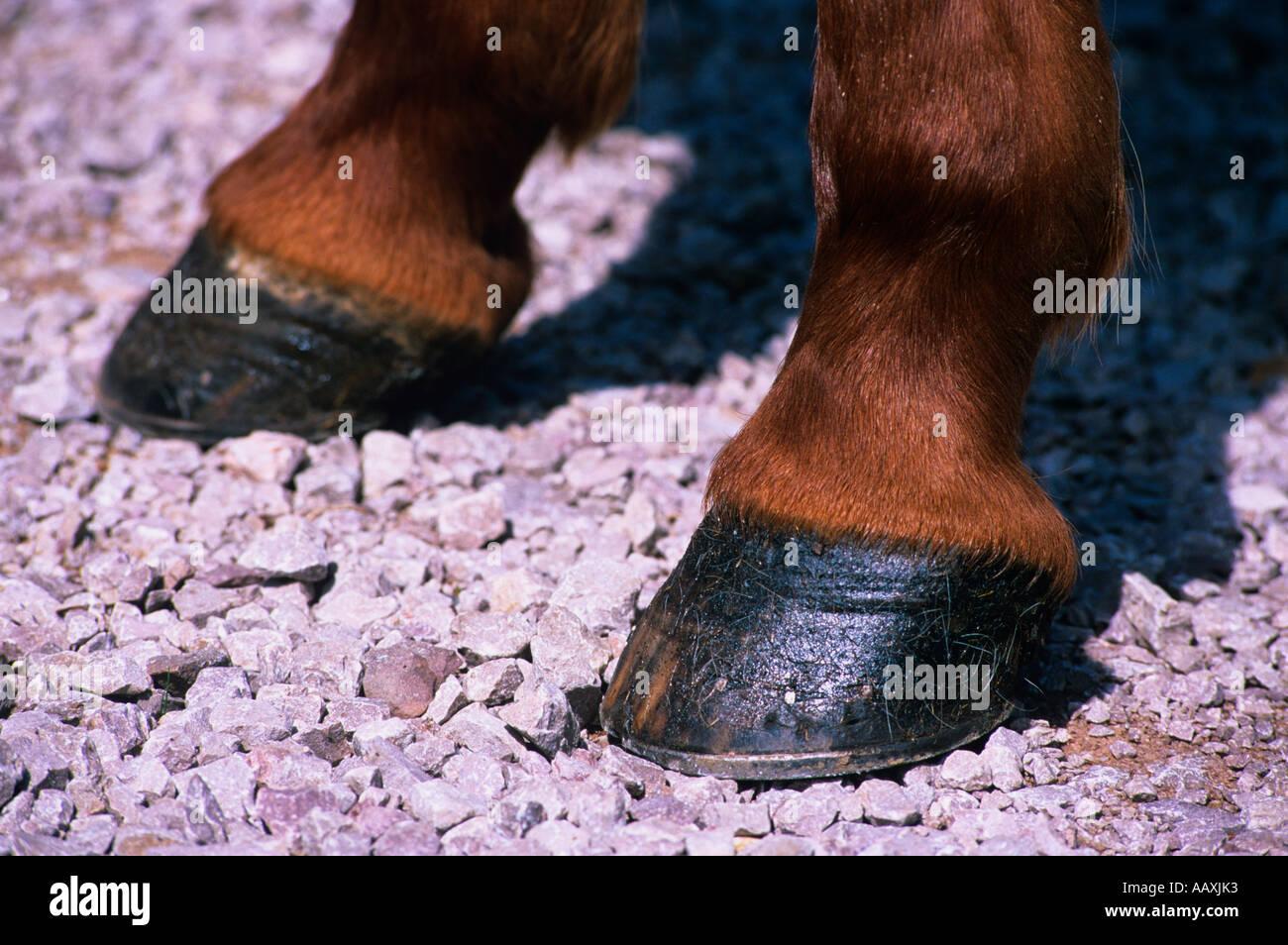 Horses hooves on gravel road - Stock Image