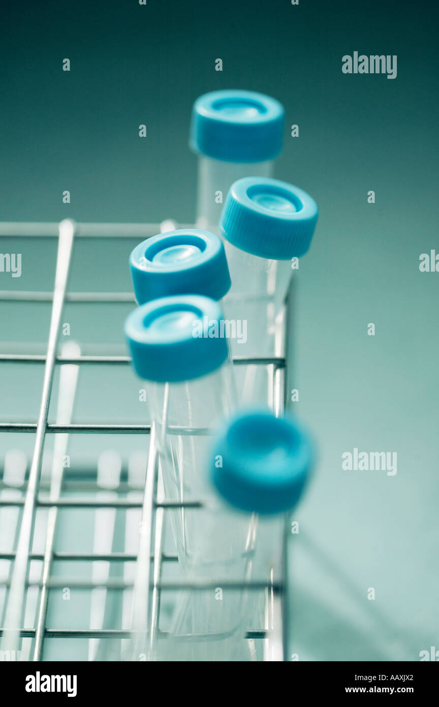 test tubes in rack - Stock Image